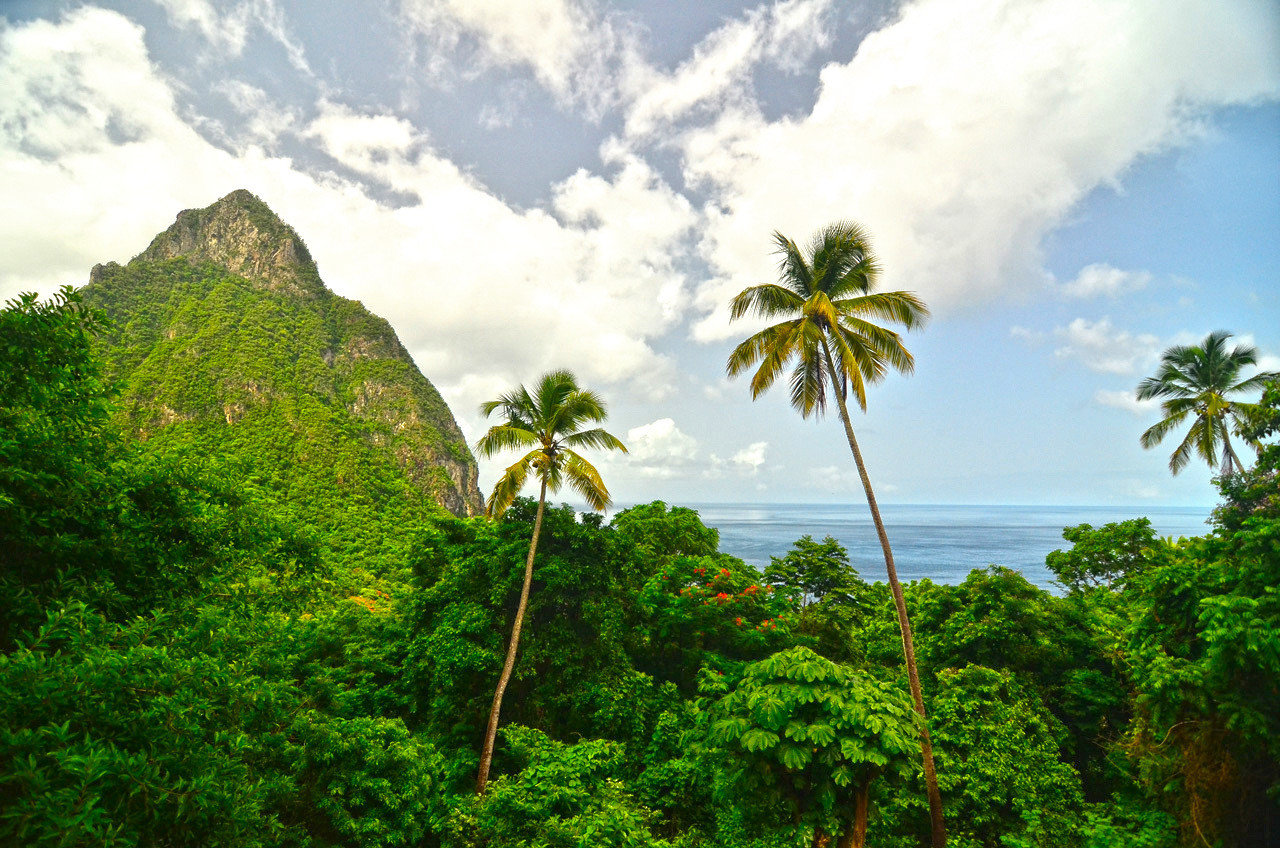Health + Wellness Trip Ideas tree sky outdoor habitat vegetation Nature green geographical feature natural environment ecosystem flora plant tropics rainforest cloud Forest hill Jungle arecales woody plant flower leaf mountain rural area sunlight landscape palm family caribbean plantation palm lush day