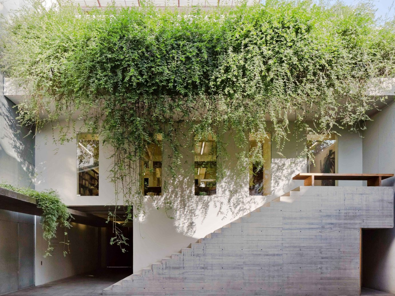City Mexico City Trip Ideas Architecture plant house flower Courtyard facade tree building
