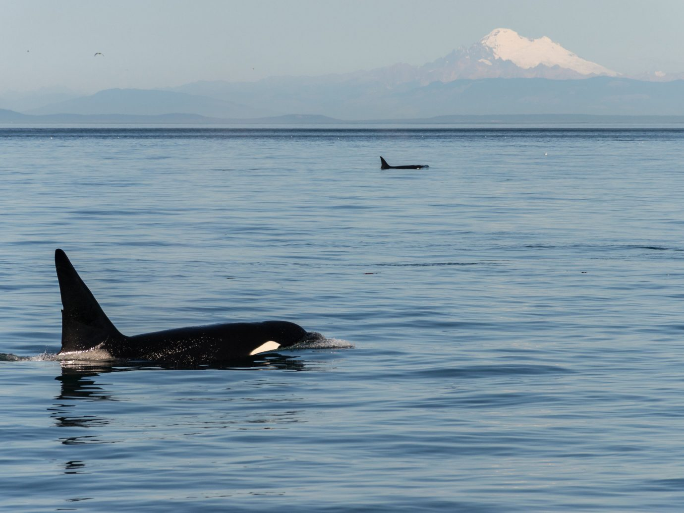 Trip Ideas water outdoor animal sky aquatic mammal mammal vertebrate marine mammal Lake whales dolphins and porpoises killer whale Sea Ocean whale floating dolphin swimming