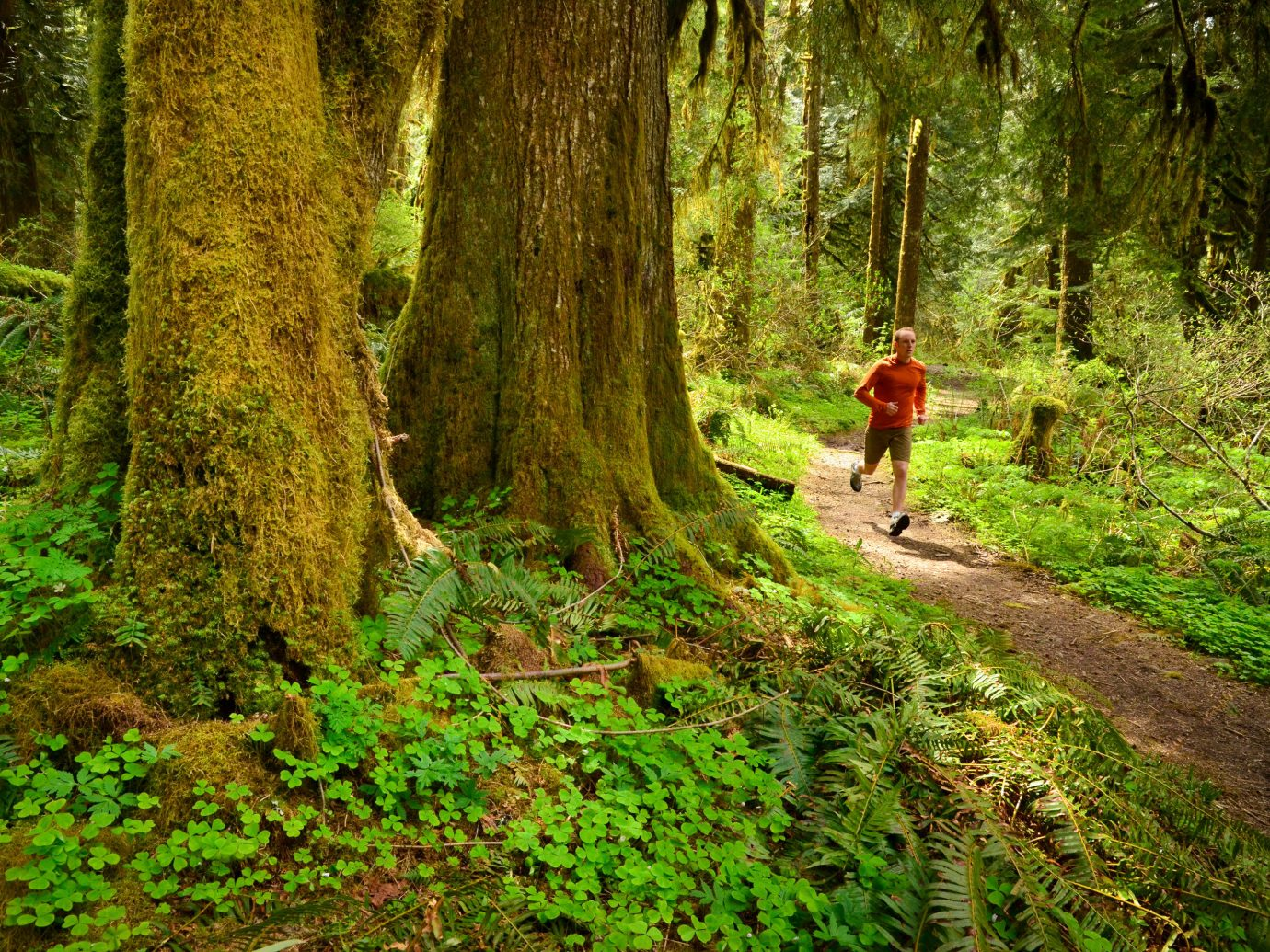 Trip Ideas tree outdoor grass habitat Forest Nature path green trail wilderness woodland vegetation natural environment wood wooded ecosystem old growth forest walking plant leaf temperate broadleaf and mixed forest woody plant rainforest autumn sunlight deciduous Jungle temperate coniferous forest ridge biome stream area dirt lush