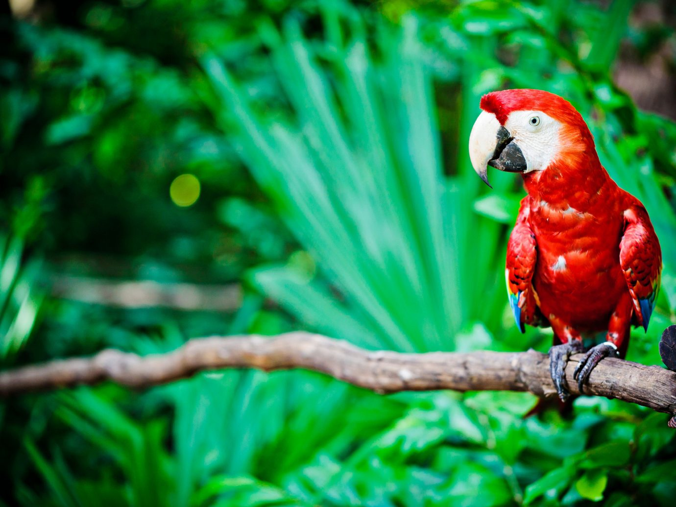 Hotels tree outdoor sitting parrot animal Bird Nature green beak vertebrate perched branch macaw fauna red Wildlife parakeet colorful Jungle lorikeet colored