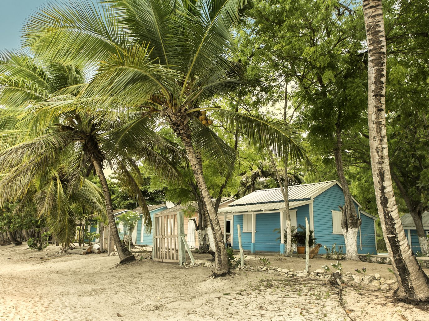 Travel Tips tree outdoor ground plant arecales vacation Beach hut Resort Jungle palm dirt area shade sandy