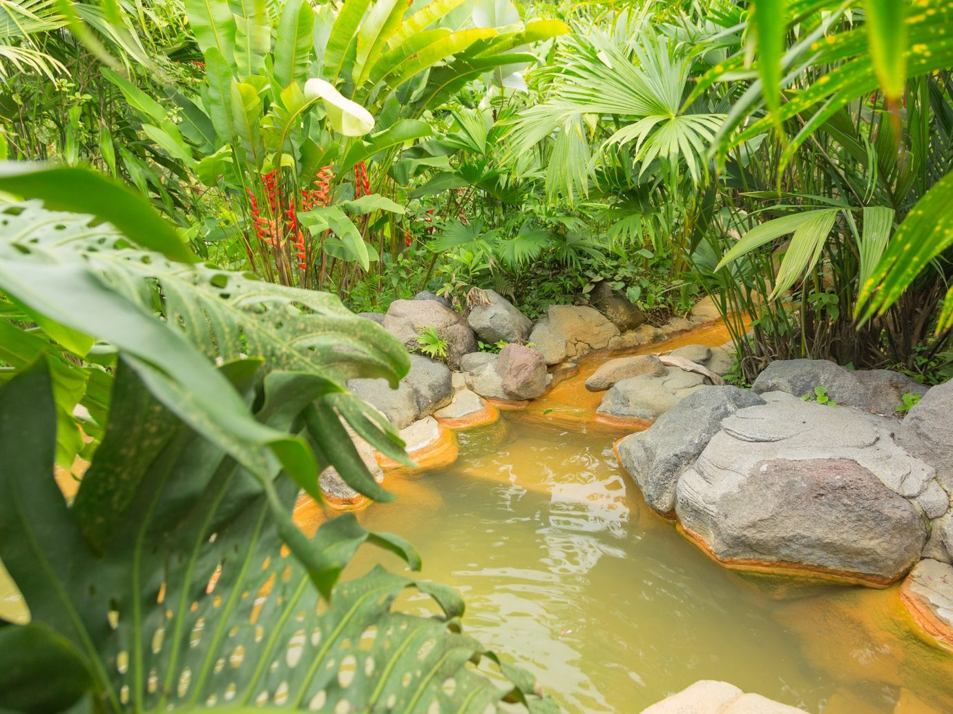 Outdoors + Adventure Trip Ideas vegetation water plant pond leaf botanical garden arecales flora watercourse Garden tropics fish pond landscape Jungle grass aquatic plant palm tree tree water feature rainforest