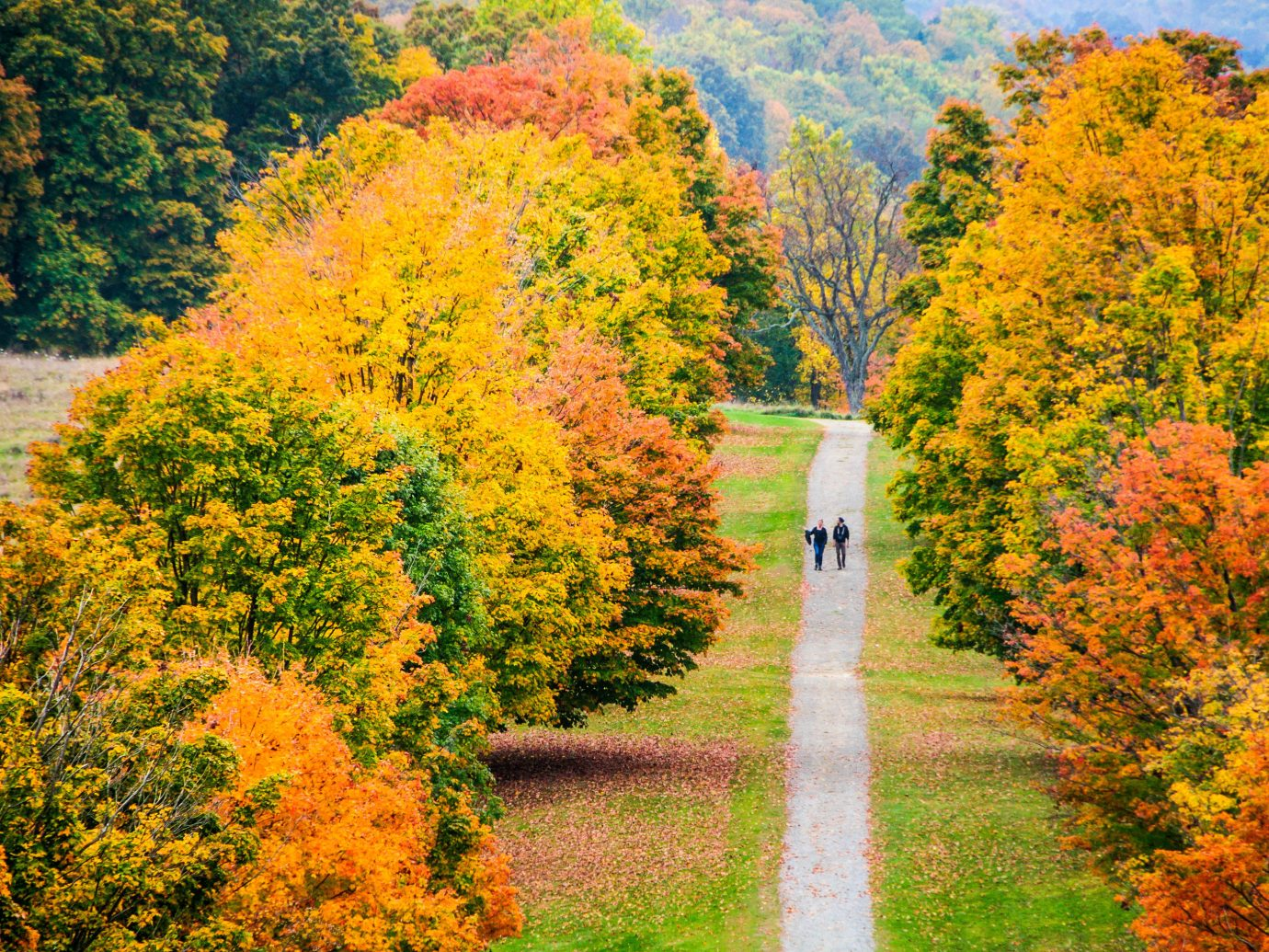 Trip Ideas tree outdoor grass autumn season leaf plant woody plant flower temperate broadleaf and mixed forest woodland shrub deciduous Forest surrounded bushes lush wooded field