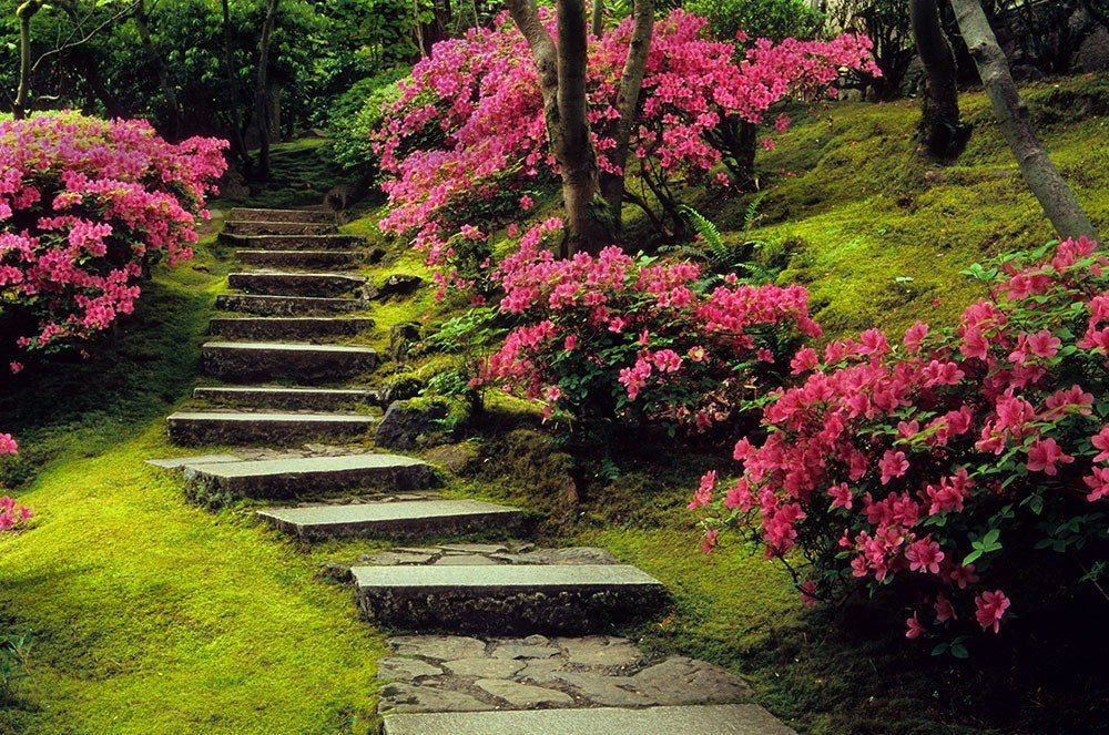Offbeat tree grass outdoor flower path plant Garden botany park land plant woody plant green shrub rhododendron flowering plant yard botanical garden azalea lawn grassy landscaping backyard surrounded lush bushes Forest walkway