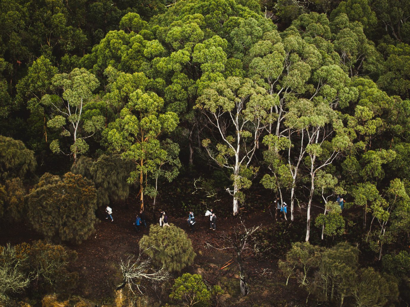 aerial Forest Greenery Hotels isolation Luxury Travel Nature Outdoor Activities Outdoors people remote trees woods tree outdoor plant habitat vegetation green natural environment ecosystem flora woodland botany leaf flower woody plant rainforest autumn landscape Garden Jungle plantation wooded
