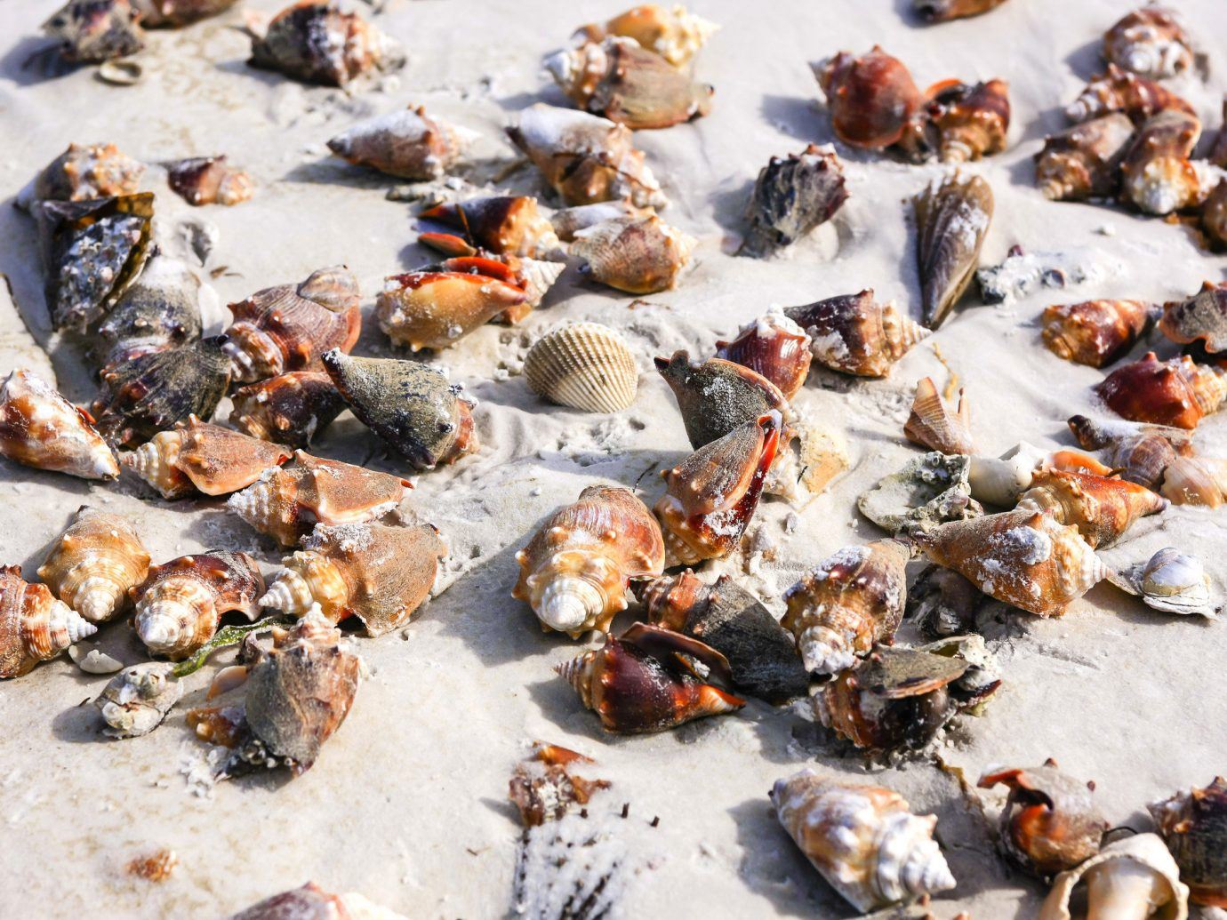 Trip Ideas covered food animal source foods dish Seafood animal product toppings fresh