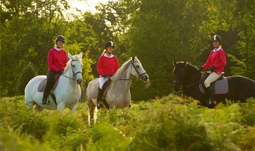 Outdoors + Adventure tree grass outdoor equestrianism trail riding endurance riding pasture english riding eventing sports mammal equestrian sport animal sports outdoor recreation group recreation meadow riding horse lush