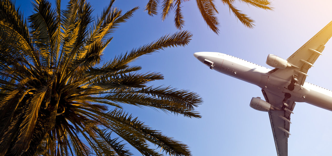 Hotels Travel Tips Trip Ideas tree sky outdoor palm plane palm tree arecales atmosphere of earth daytime plant air outdoor object