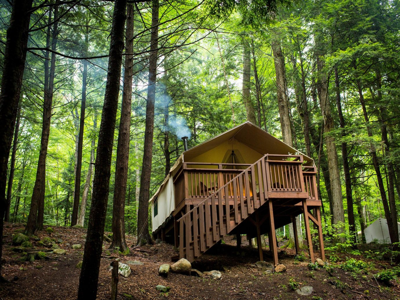 Hotels tree outdoor habitat ground building Nature Forest wood wilderness natural environment woodland hut wooden house wooded Jungle park rural area shack rainforest area log cabin backyard surrounded lush