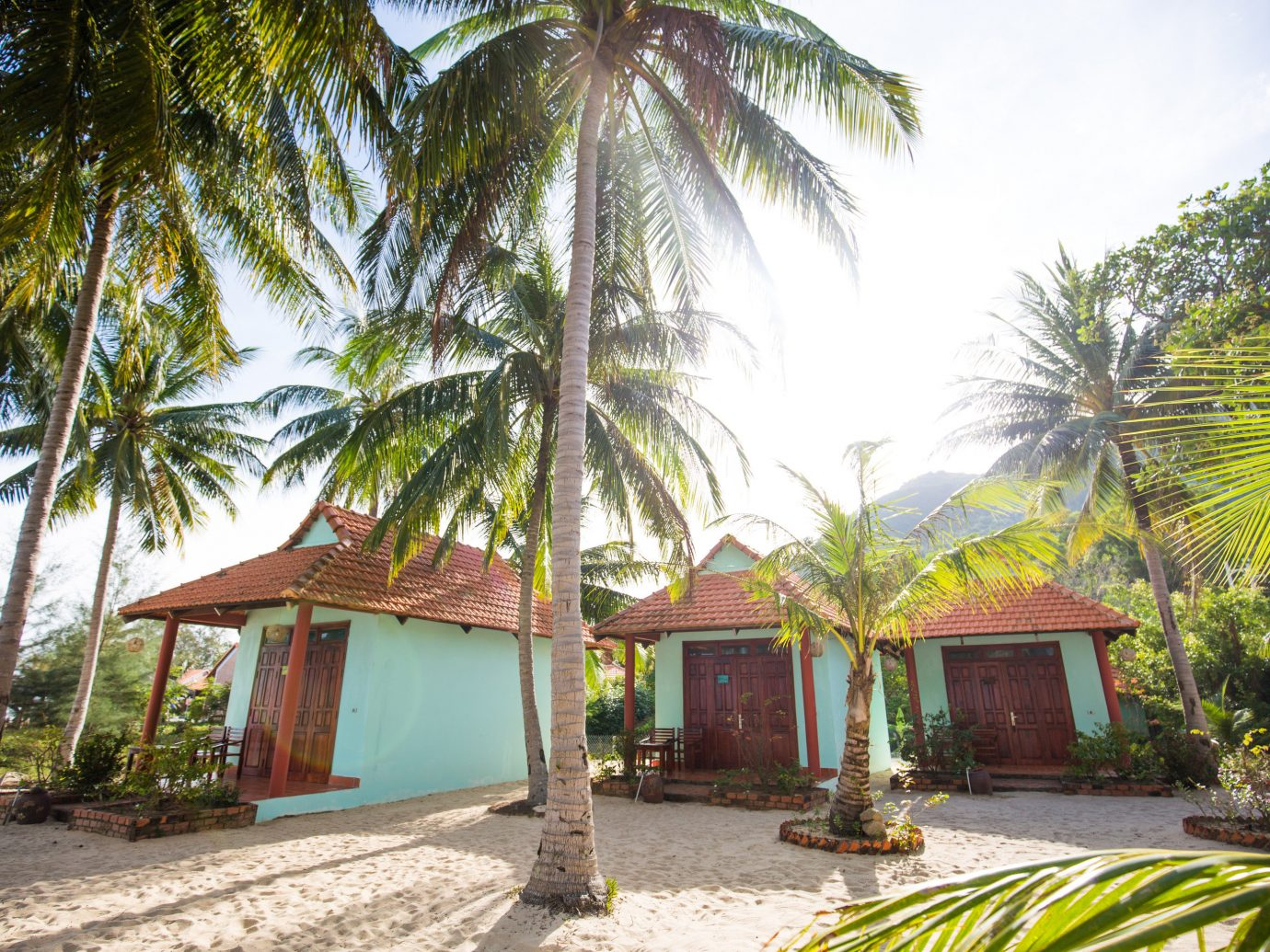 Solo Travel Trip Ideas tree outdoor ground plant Resort property palm caribbean vacation arecales estate real estate Jungle tropics eco hotel hacienda Villa Village palm family shade