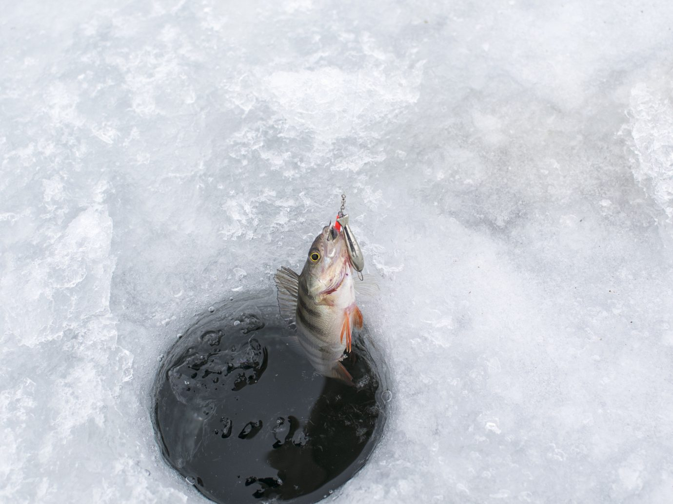 Winter snow water outdoor freezing ice wave water sport fish winter storm
