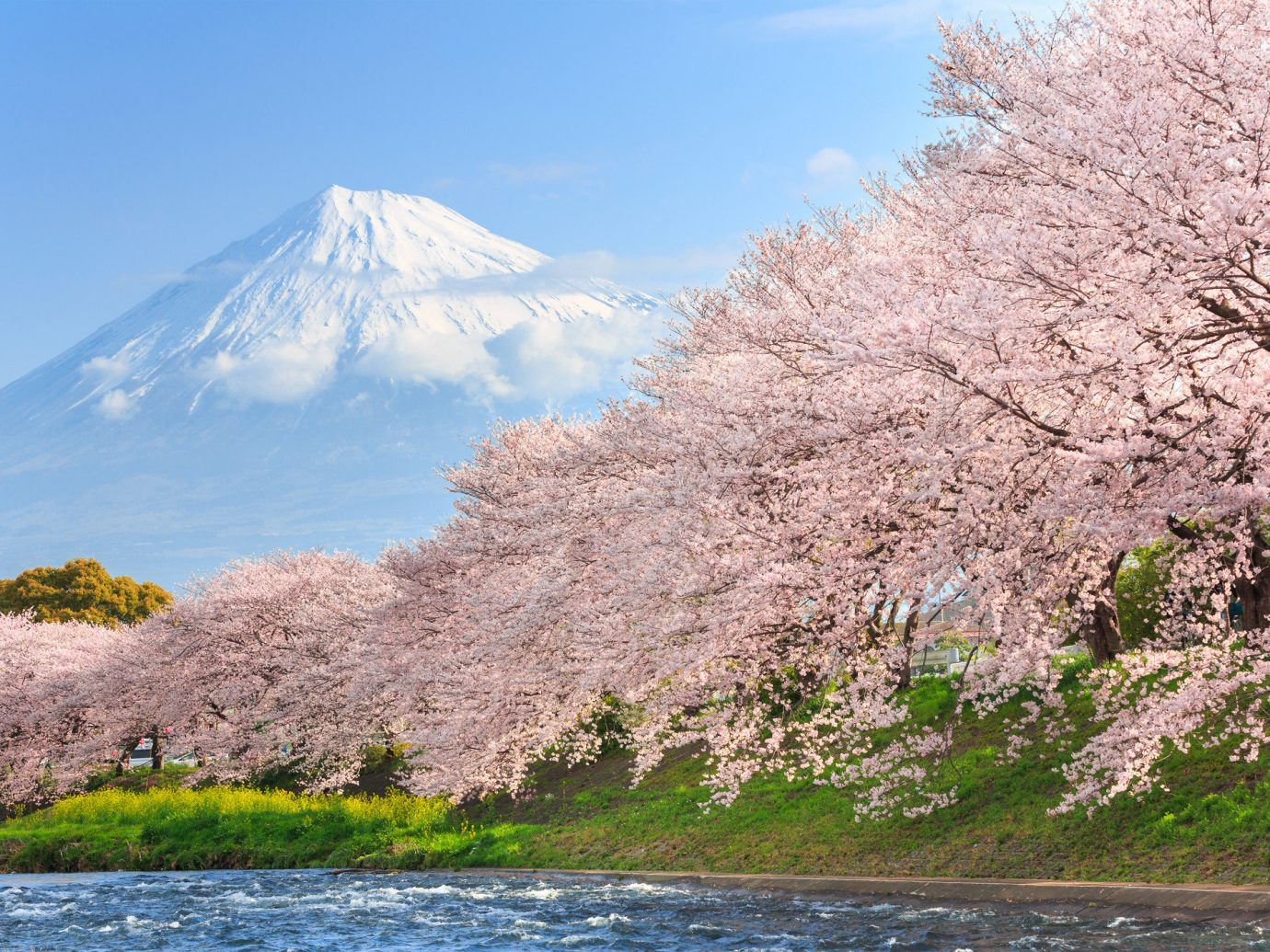 Arts + Culture Festivals + Events Hotels Offbeat Travel Tips Trip Ideas outdoor mountain sky flower Nature cherry blossom plant blossom River hillside surrounded