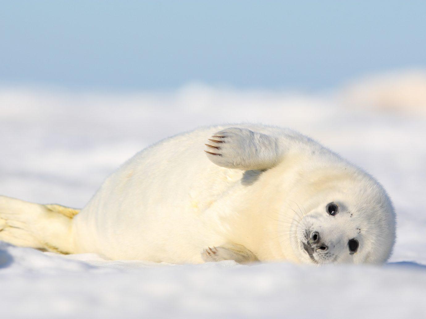 Offbeat animal polar polar bear outdoor mammal vertebrate harbor seal aquatic mammal fauna white seal bear parrot seals arctic marine mammal Bird