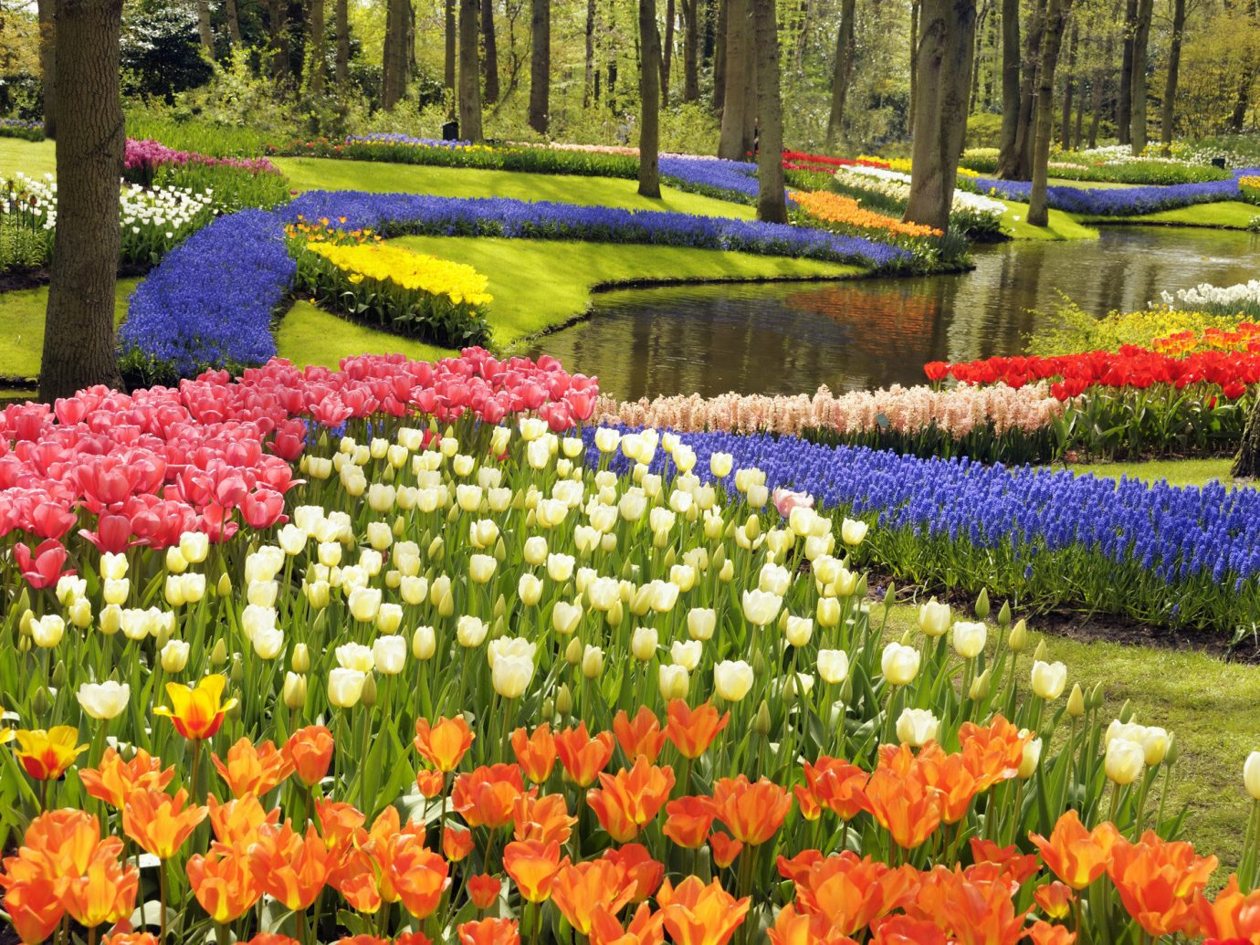 Trip Ideas grass tree flower outdoor Garden plant tulip flora botany land plant flowering plant colorful park botanical garden annual plant lawn lily family colored surrounded
