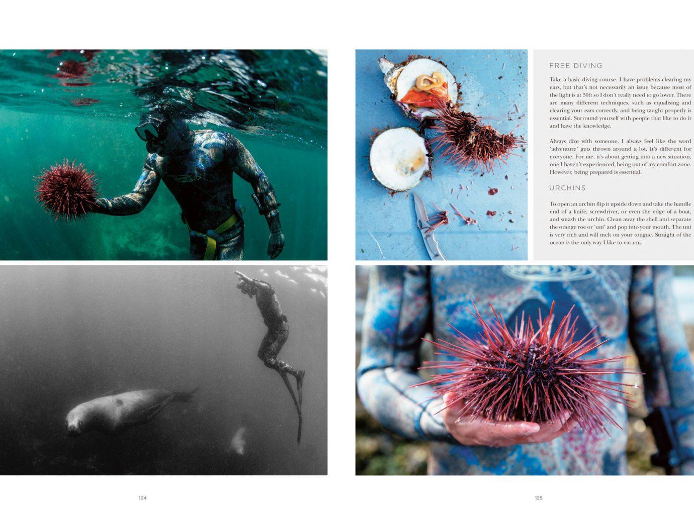 Arts + Culture biology organism brand illustration