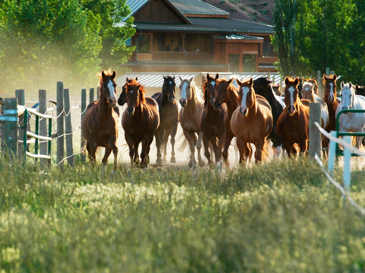 Grounds Outdoor Activities Outdoors Outdoors + Adventure Scenic views Trip Ideas Wildlife grass outdoor tree horse cow herd group pasture animal cattle mammal Farm rural area horse like mammal row Ranch line lined several