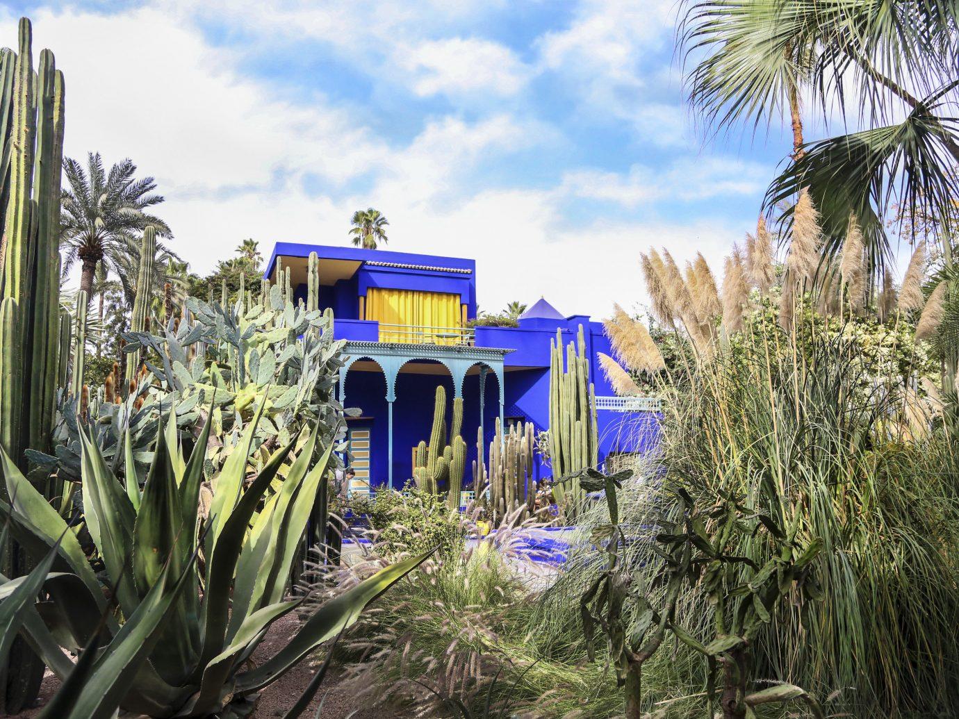 Arts + Culture Marrakech Morocco Style + Design plant majorelle blue arecales tree palm tree sky real estate grass landscape house