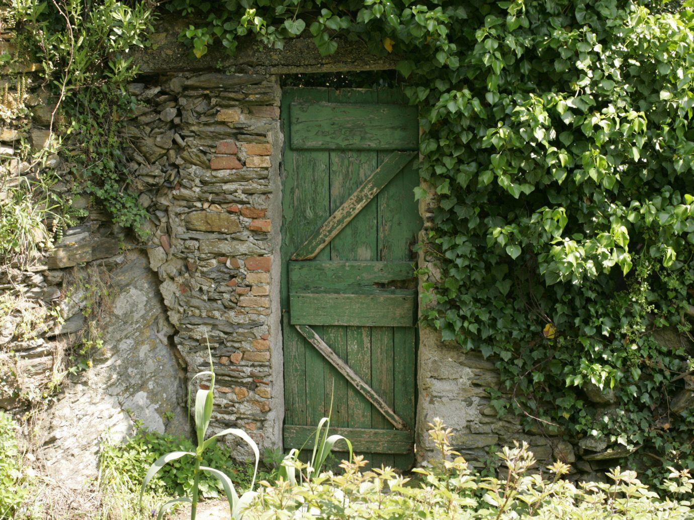 Offbeat outdoor tree green building wall woodland shed rural area Garden cottage yard house outdoor structure outhouse flower shrub trail plant