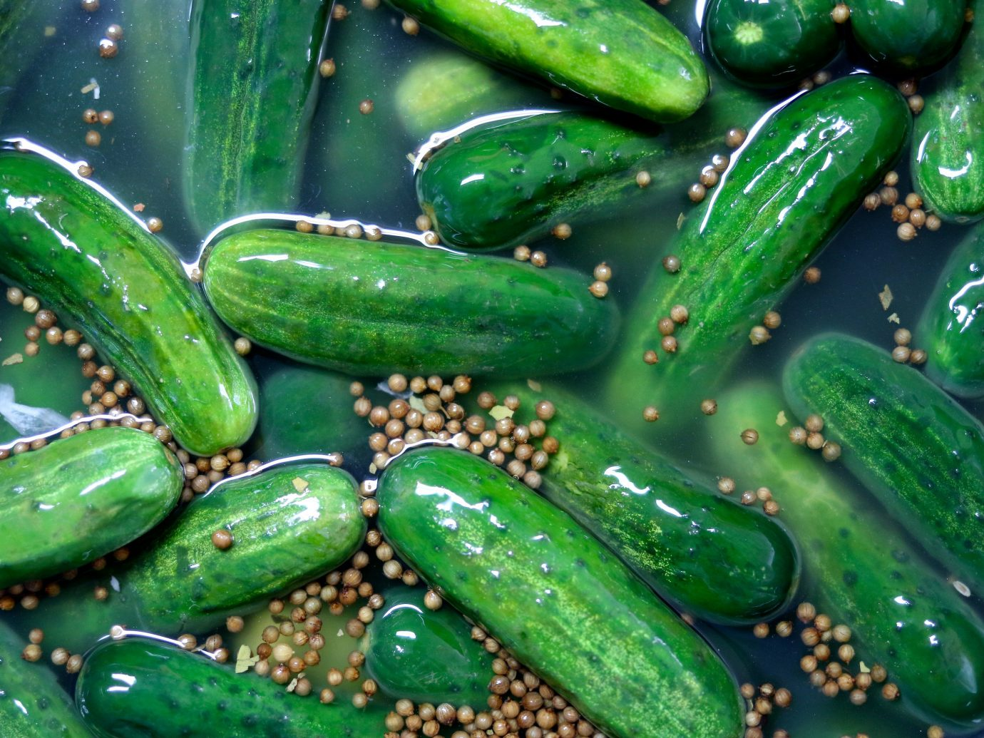 Budget green food cucumber plant produce vegetable land plant flowering plant cucumber gourd and melon family jalapeño gourd flower different arranged several