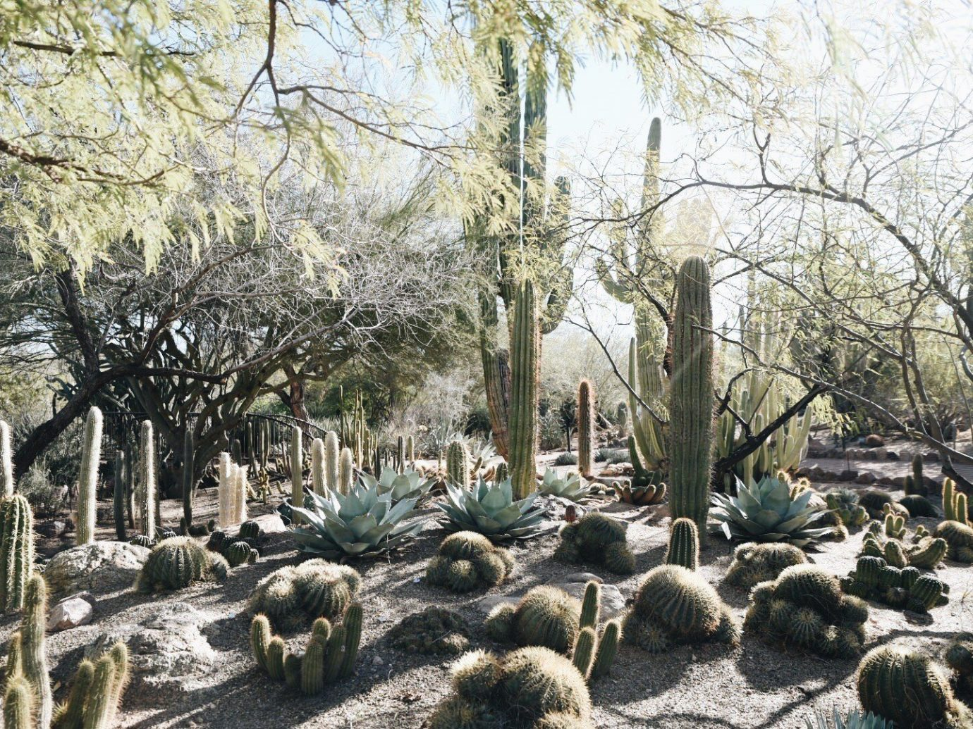 Jetsetter Guides tree plant outdoor cactus flora botany flower land plant Garden landscape flowering plant shade