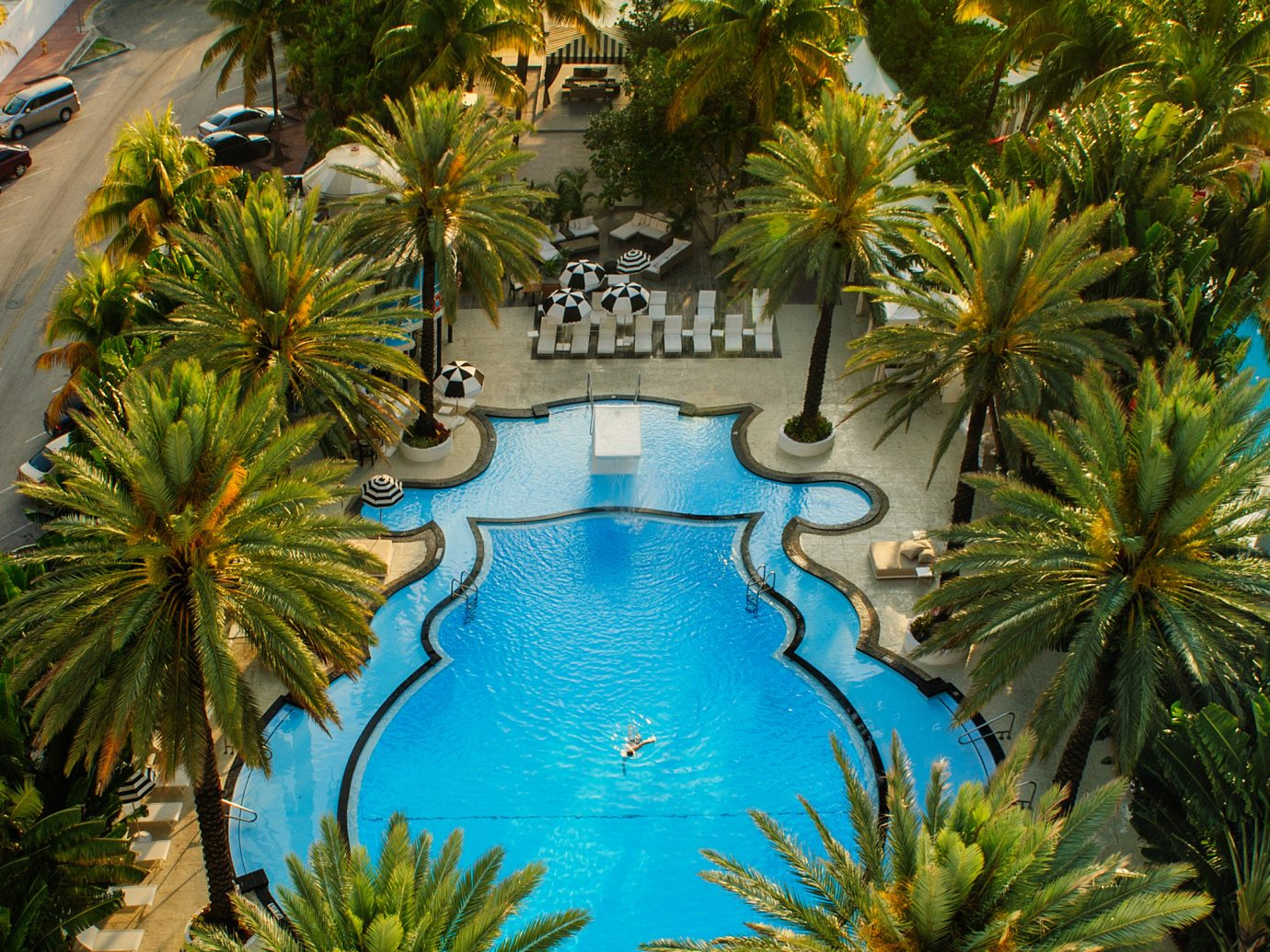 Hotels tree palm plant swimming pool outdoor Resort arecales estate Garden colorful lined surrounded Christmas