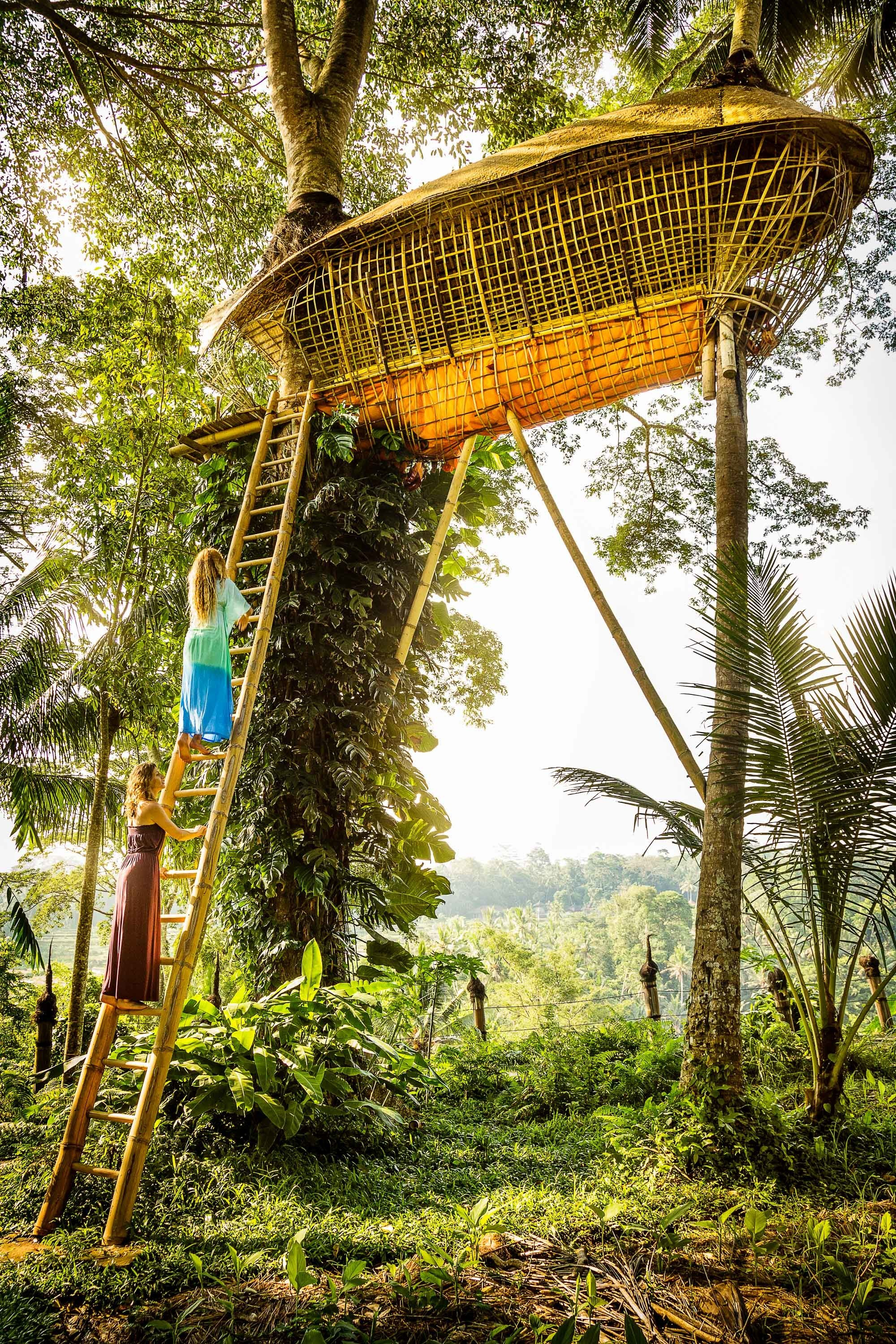 Boutique Hotels Hotels tree outdoor plant grass Jungle outdoor structure arecales Forest grass family sky leisure landscape