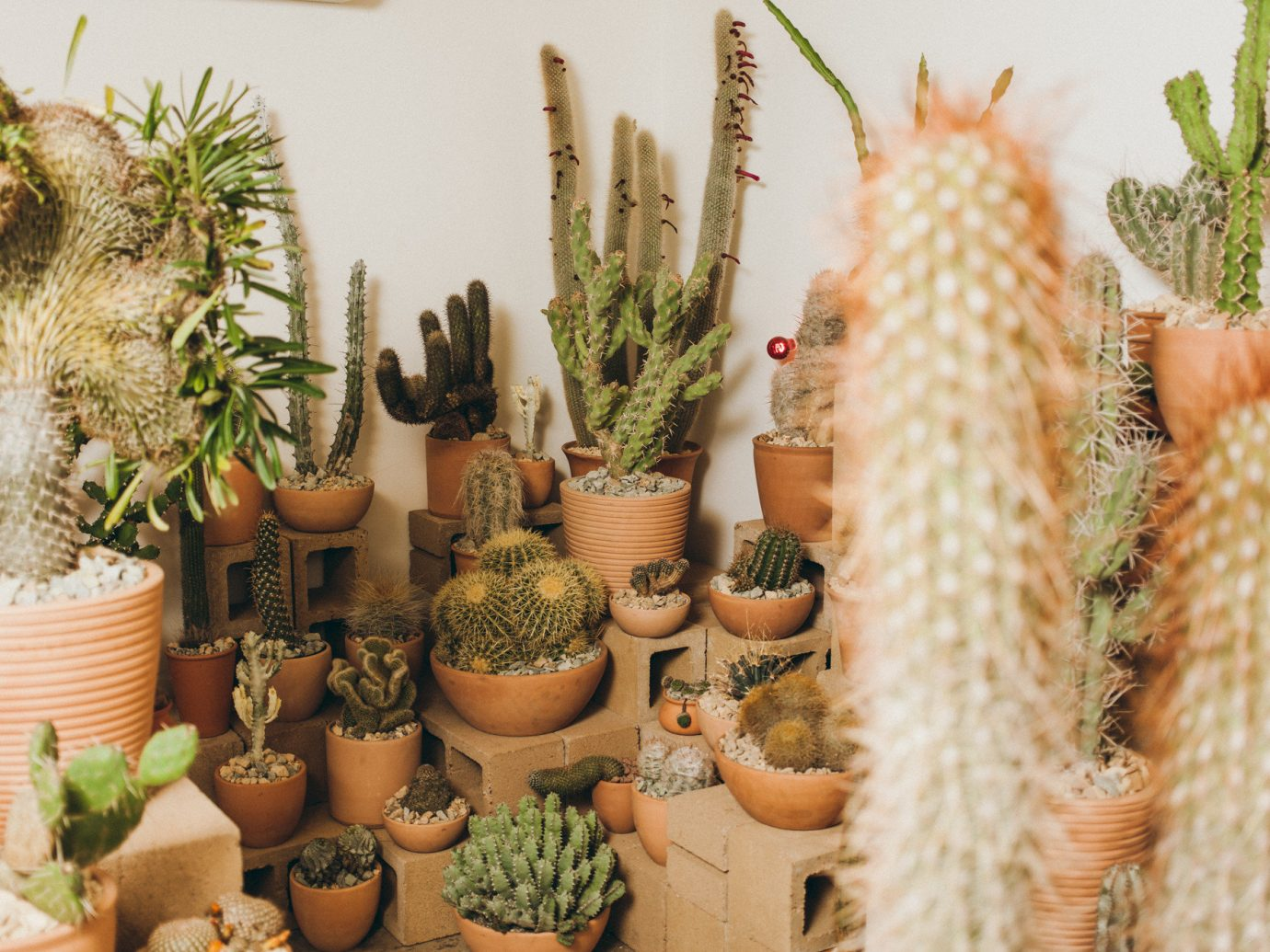 Offbeat Style + Design Travel Trends plant cactus flowerpot hedgehog cactus flowering plant caryophyllales decorated arranged several