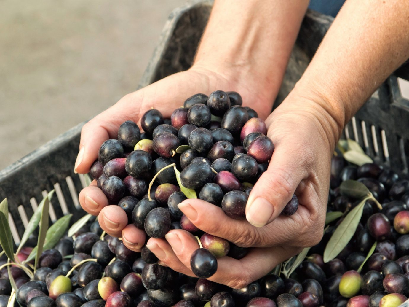 Trip Ideas person food produce fruit plant land plant berry olive flowering plant vegetable