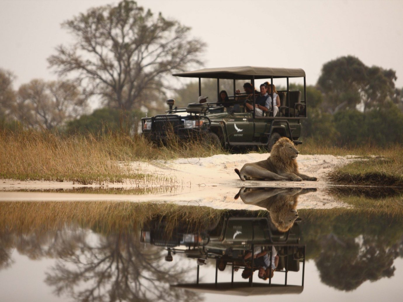 andBeyond Sandibe Okavango Safari Lounge, Botswana Lion in Africa