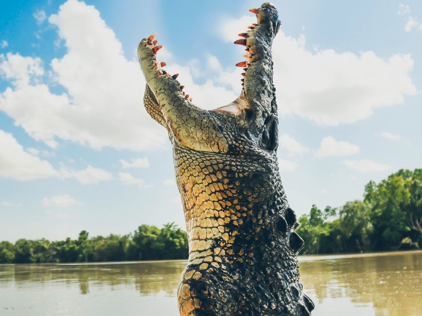Trip Ideas sky outdoor water tree crocodile crocodilia River Lake Wildlife alligator plant