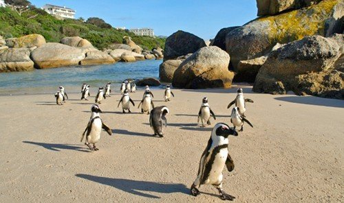 Outdoors + Adventure Scuba Diving + Snorkeling outdoor flightless bird water penguin Beach mountain Bird animal group sandy Island day