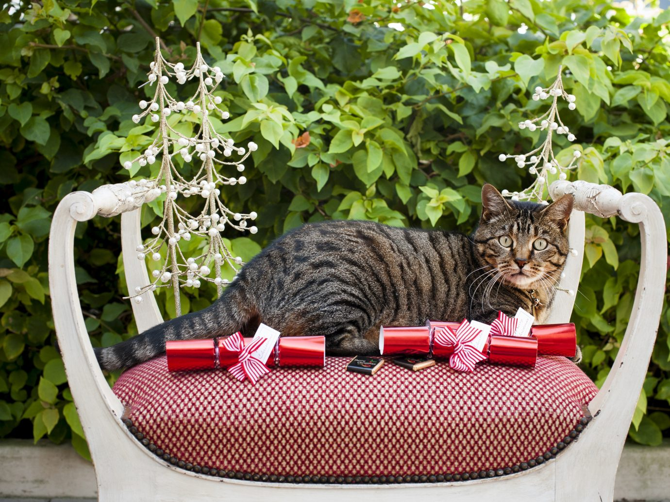 Hotels cat basket outdoor container mammal red plant laying kitten cat like mammal flower small to medium sized cats Garden