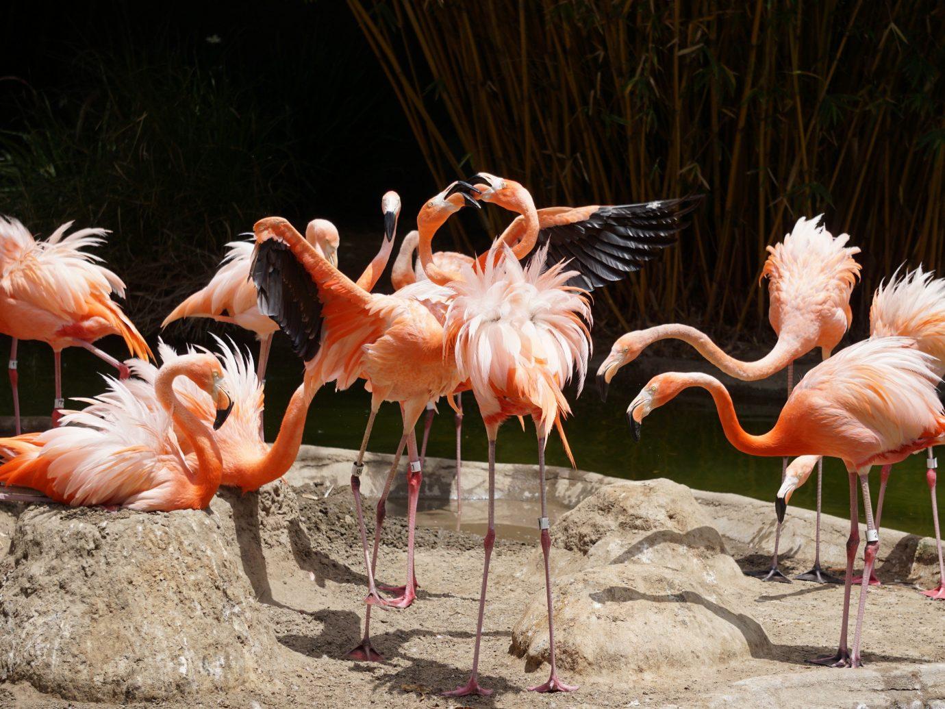 Family Travel Trip Ideas Weekend Getaways Bird flamingo outdoor animal aquatic bird ground flock vertebrate standing group beak fauna water bird zoo colored