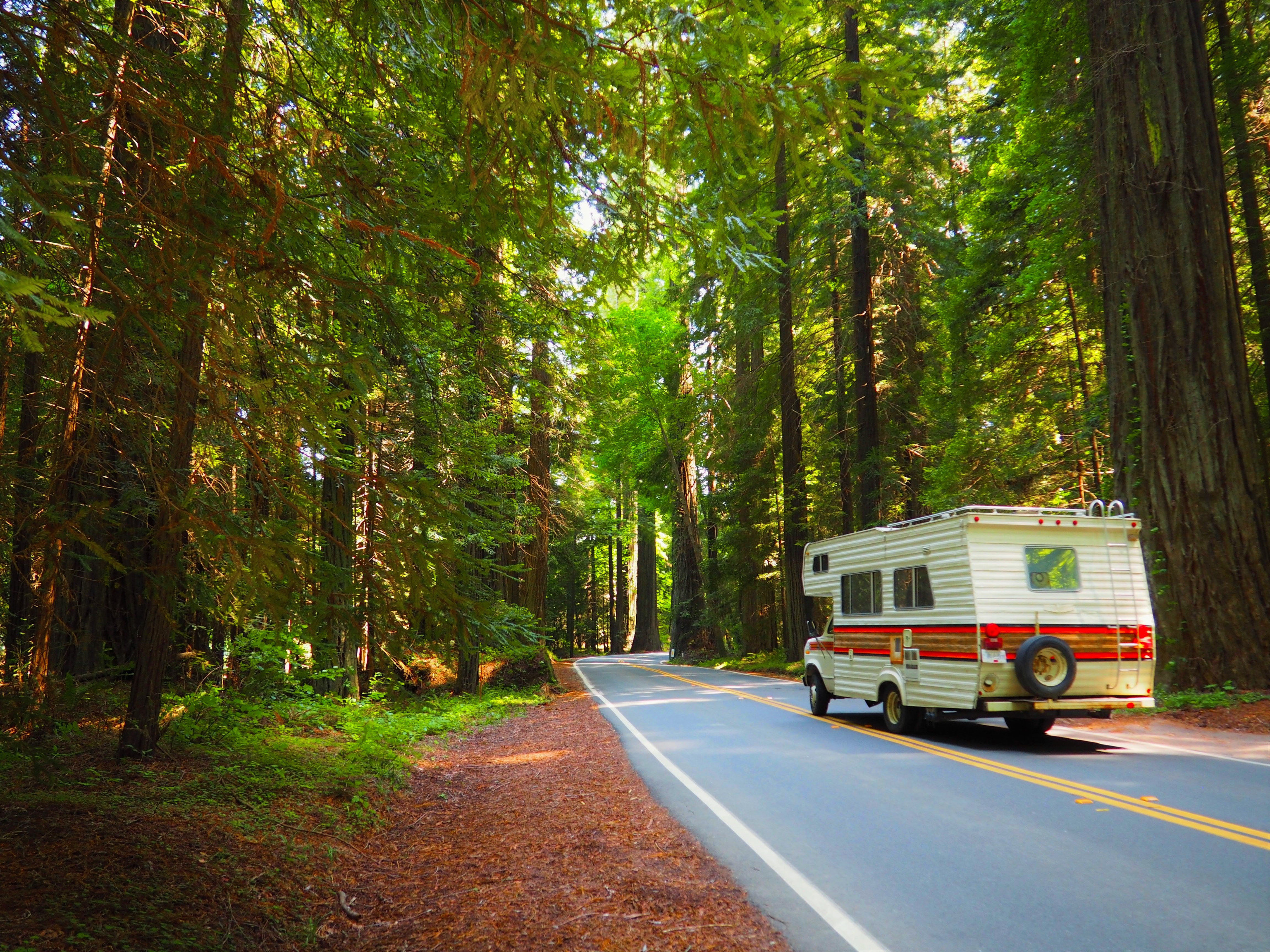 Family Travel National Parks Trip Ideas tree outdoor road habitat bus natural environment driving Forest season woody plant autumn woodland vehicle traveling wooded
