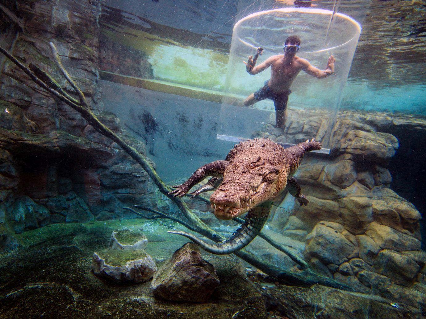 Trip Ideas water rock outdoor underwater organism marine biology screenshot ocean floor