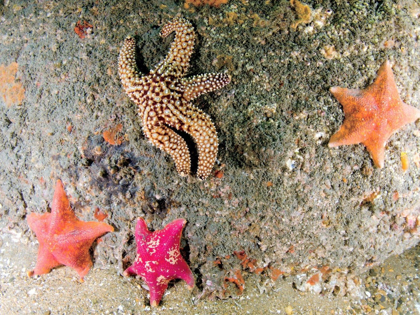 Hotels starfish animal echinoderm marine biology outdoor fauna marine invertebrates invertebrate biology coral