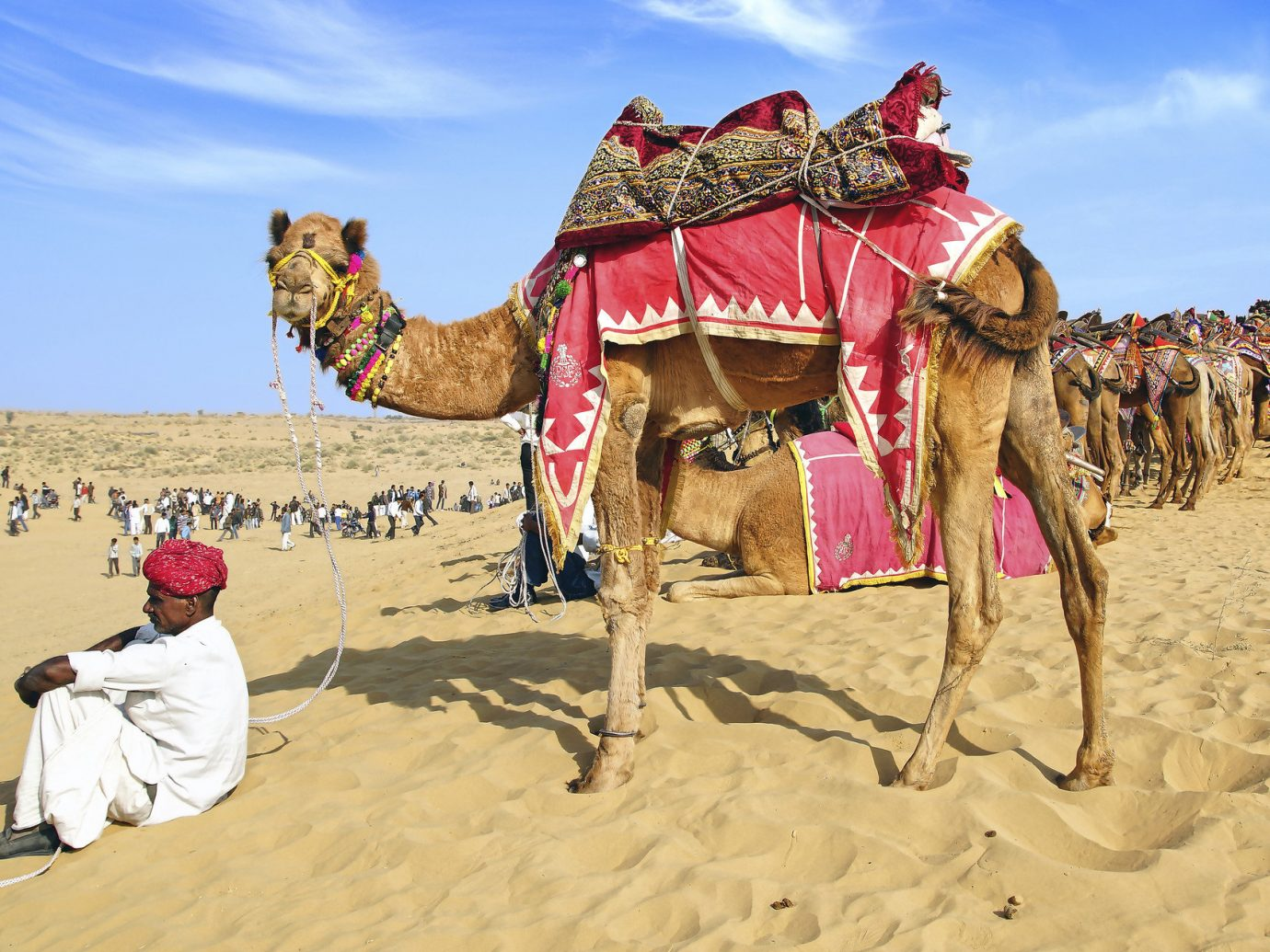 Travel Tips sky Camel outdoor natural environment camel like mammal arabian camel sahara Desert landscape aeolian landform sand erg several