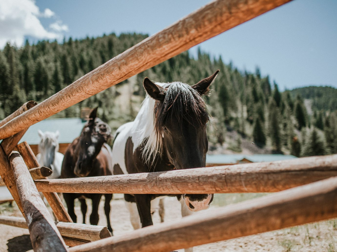 Glamping Hotels Montana Outdoors + Adventure Trip Ideas tree horse like mammal horse mane wood rural area Ranch stallion sky livestock pasture snout plant Winter landscape grass mustang horse Farm