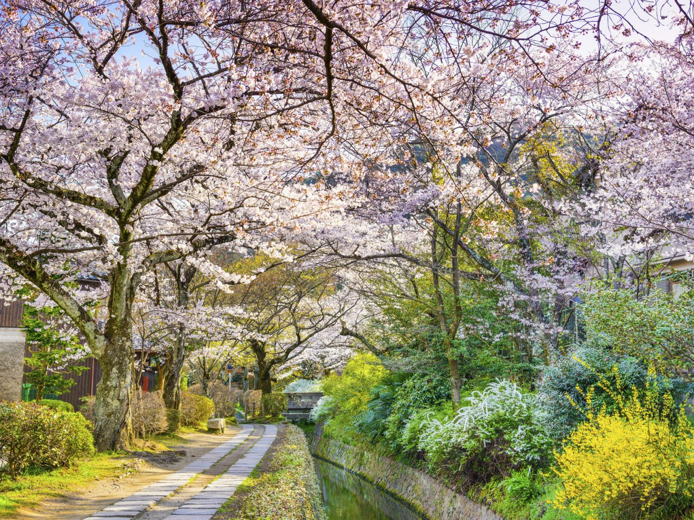 Arts + Culture Festivals + Events Travel Tips tree outdoor flower plant blossom cherry blossom botany season Garden spring surrounded Forest wooded