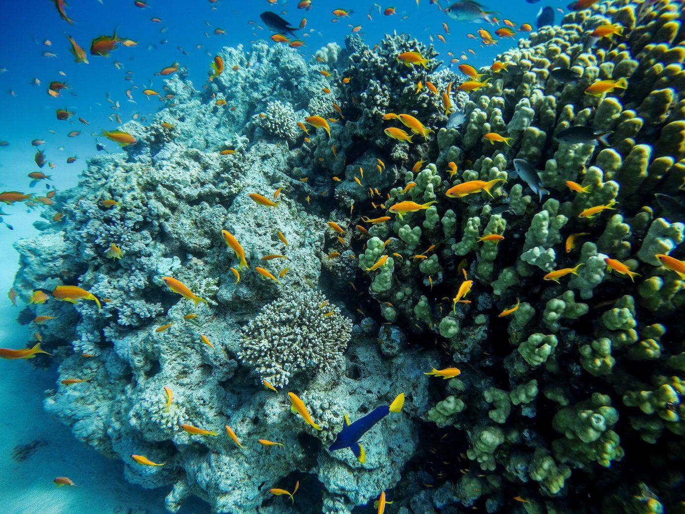 Trip Ideas coral reef marine biology reef coral ecosystem organism Nature underwater coral reef fish stony coral ocean floor
