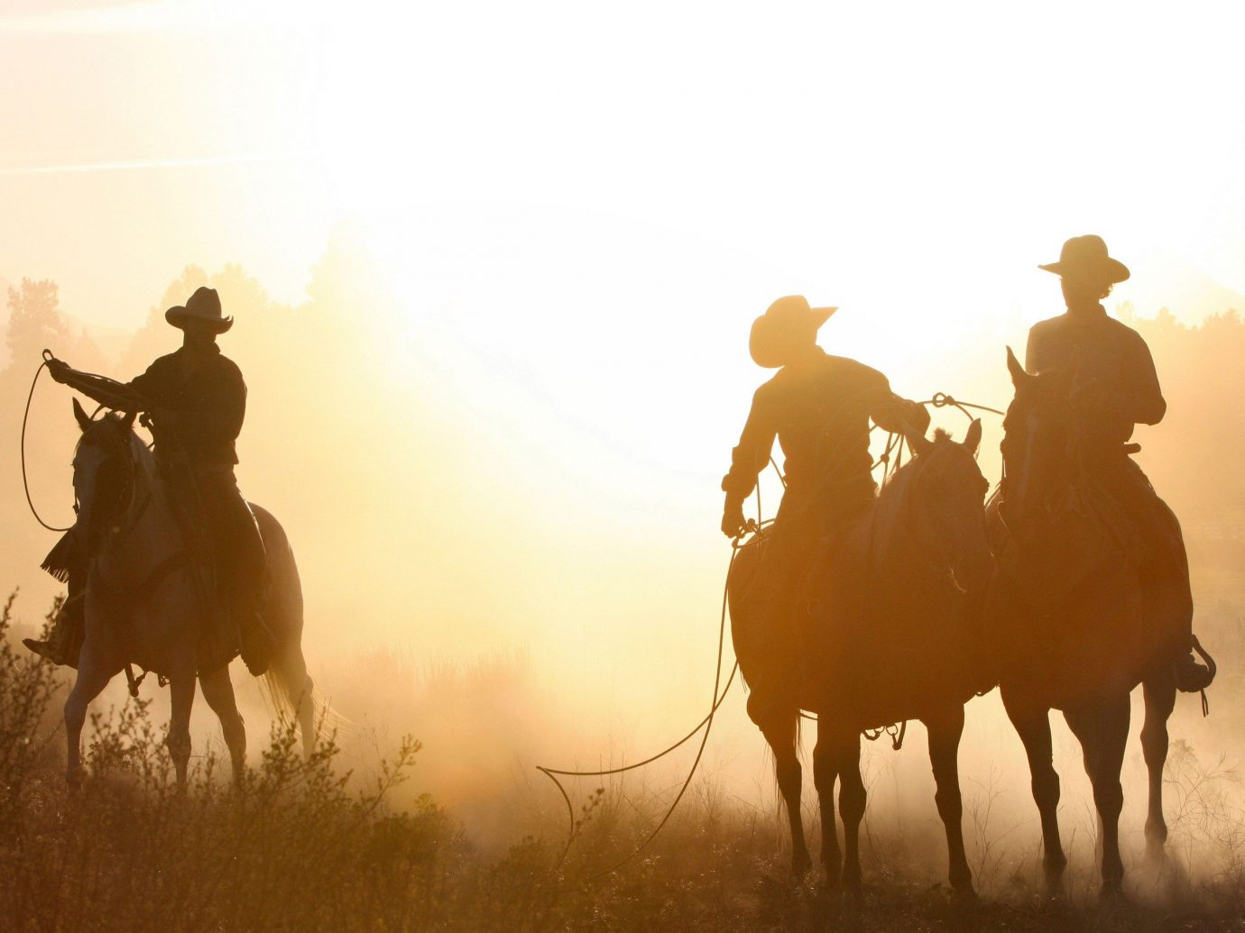Outdoors + Adventure sky outdoor horse grass atmospheric phenomenon Sunset mustang horse morning herd silhouette animal sports cowboy clouds
