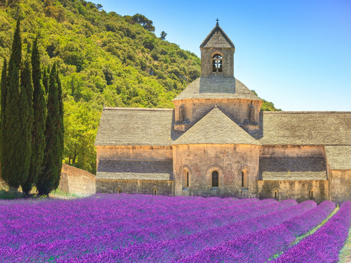 Offbeat outdoor grass building flower plant old land plant rural area field stone Church monastery estate flowering plant place of worship Garden