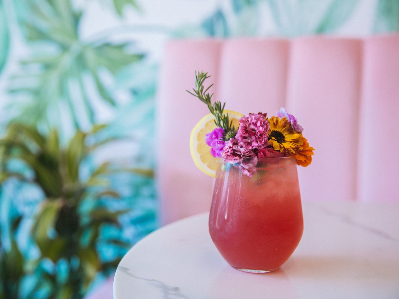 Jetsetter Guides flower plant Drink petal still life photography