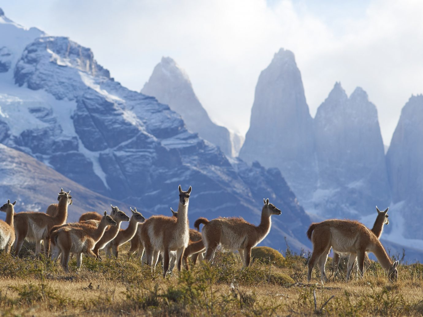 Jetsetter Guides Packing Tips Travel Tips Trip Ideas grass mountain sky outdoor field ecosystem Wildlife fauna animal wilderness group guanaco mammal national park camel like mammal standing grassy grassland herd llama ecoregion mountain range pasture fell vicuña landscape hill hillside lush