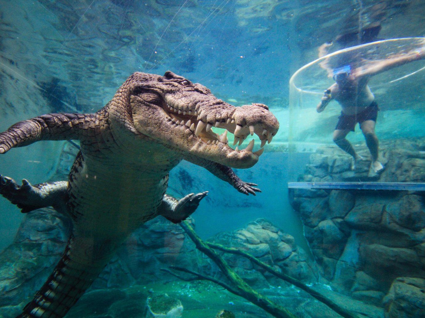 Trip Ideas animal reptile underwater ecosystem rock water marine biology organism crocodilian reptile sea turtle dinosaur turtle computer wallpaper extinction trunk
