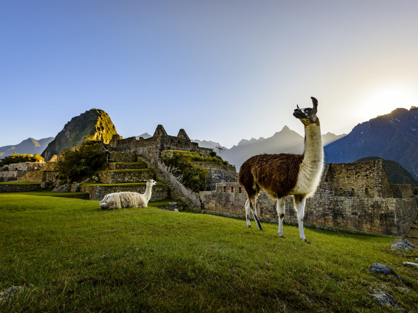 Travel Tips grass sky outdoor field Nature mountainous landforms wilderness mountain Wildlife landscape mammal grassy rural area green mountain range llama pasture lush hillside highland