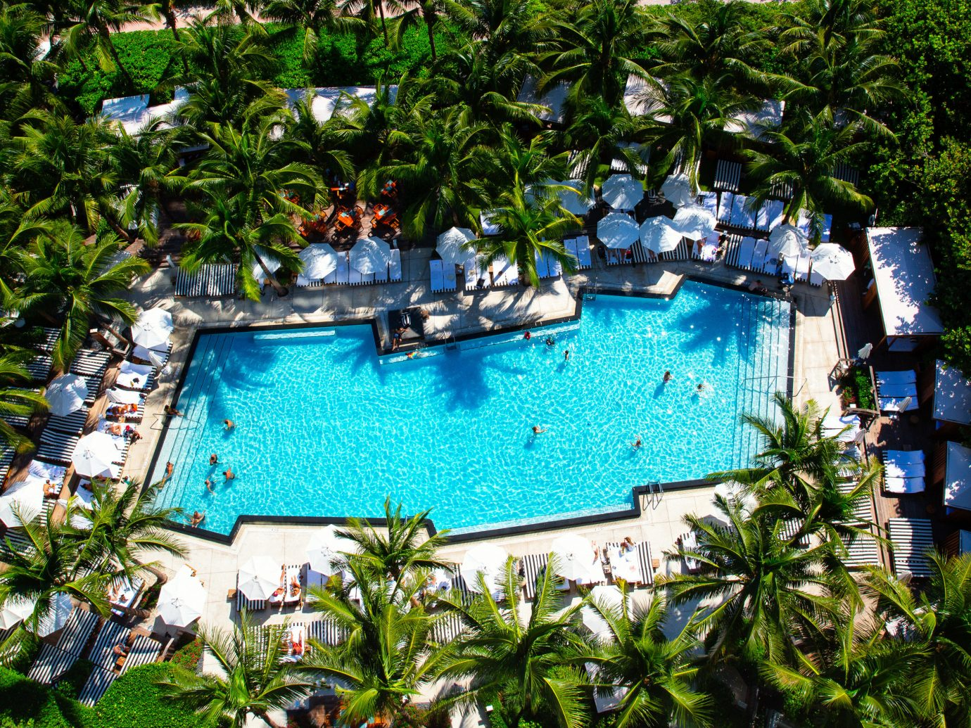 Hotels tree outdoor swimming pool building plant Resort estate backyard Garden pond Jungle flower cottage Villa surrounded several