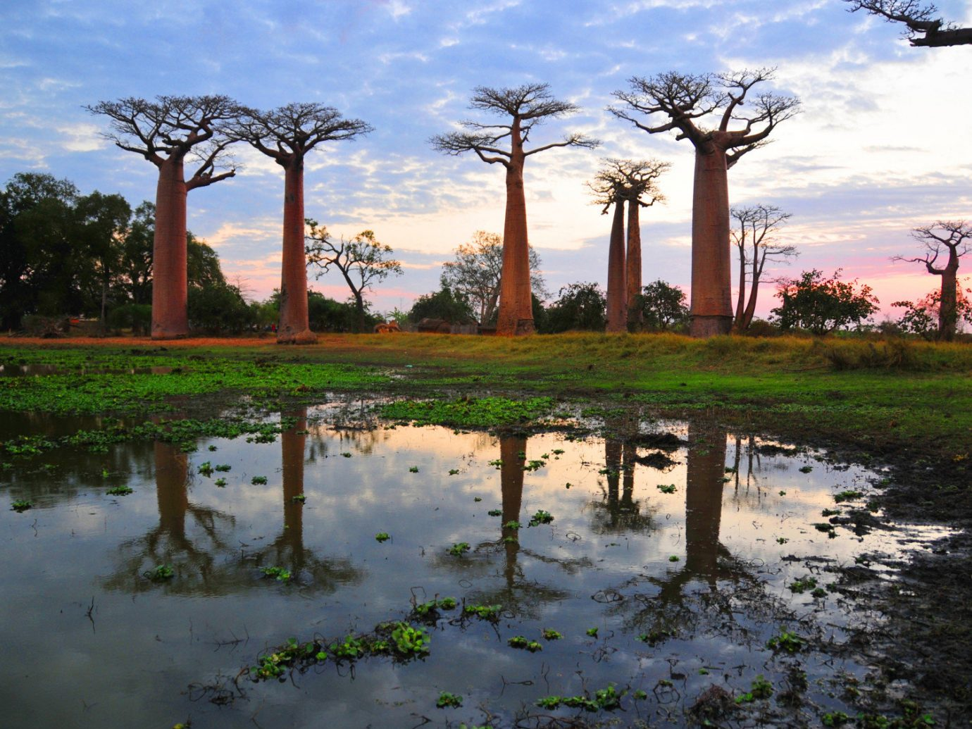 Trip Ideas outdoor sky water tree plant vacation arecales woody plant Ruins rural area savanna landscape flower park reflection Garden wetland several sandy
