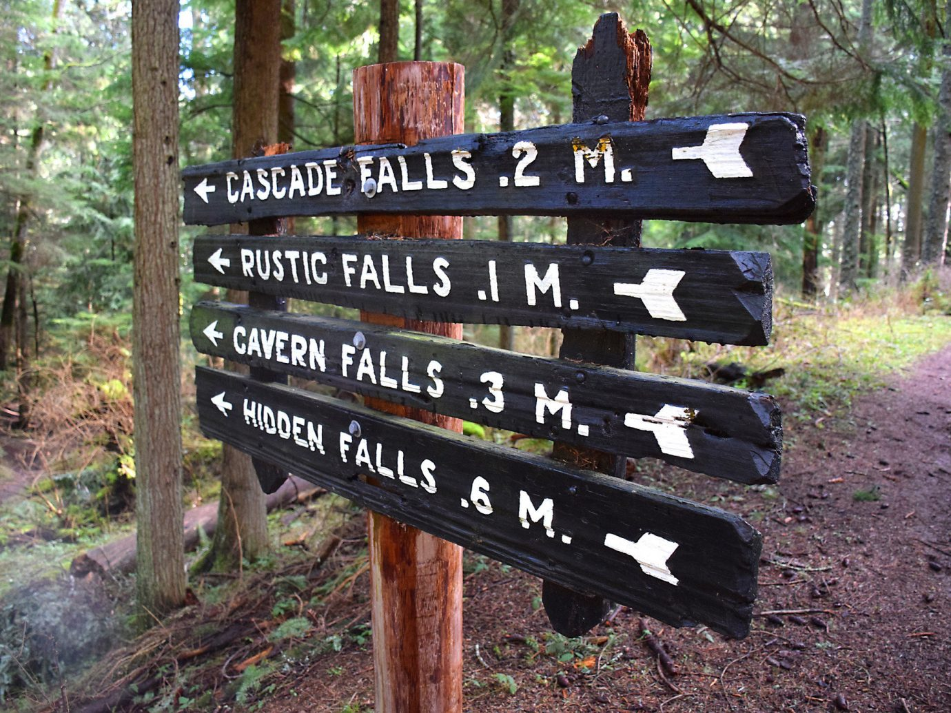 Trip Ideas tree outdoor grass trail wilderness wood wooden sign park Forest signage traffic sign wooded